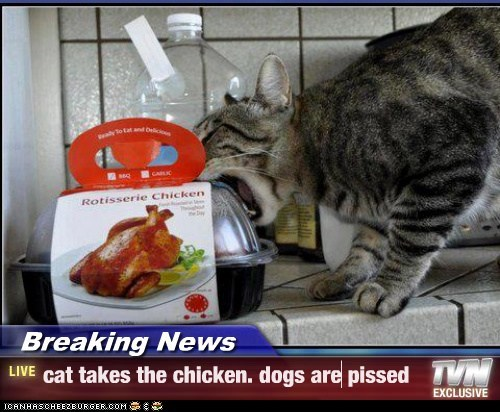 Breaking News - cat takes the chicken. dogs are pissed