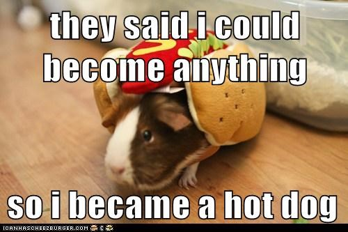 they said i could be anything,hot dog,guinea pigs,costume