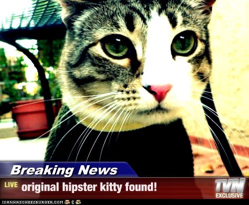 Breaking News - original hipster kitty found!