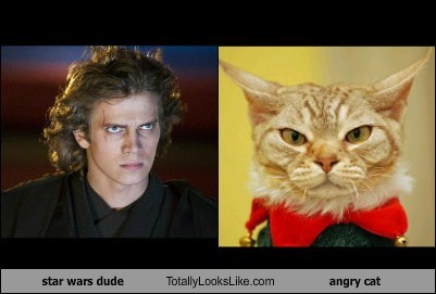 star wars dude Totally Looks Like angry cat