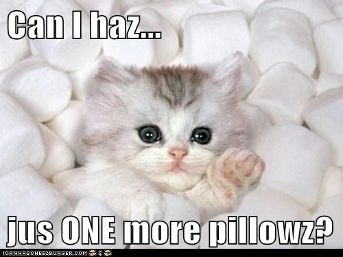 Can I haz...  jus ONE more pillowz?