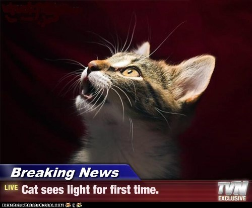 Breaking News - Cat sees light for first time.
