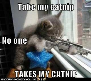 Take my catnip No one  TAKES MY CATNIP