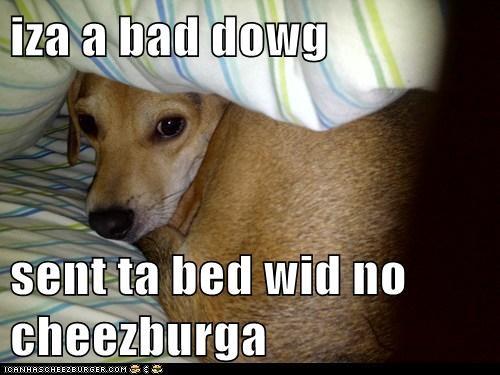iza a bad dowg  sent ta bed wid no cheezburga