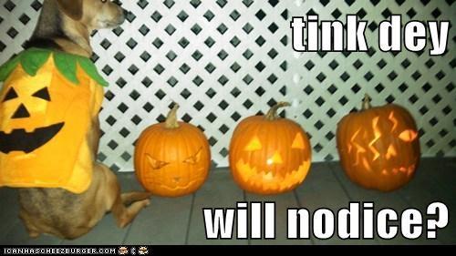 tink dey   will nodice?