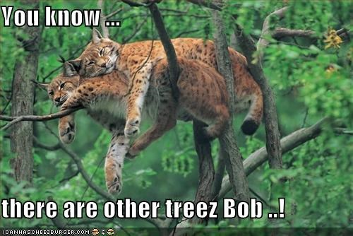 You know ...  there are other treez Bob ..!