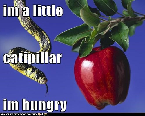 im a little  catipillar im hungry