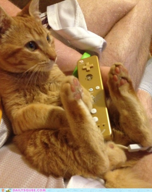 reader squee,pets,video games,Cats,wii,squee,nintendo