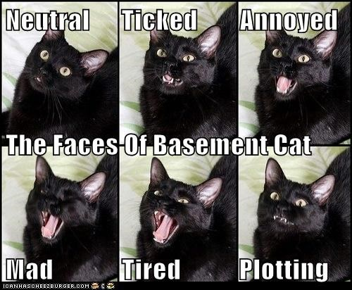 Neutral      Ticked        Annoyed The Faces Of Basement Cat Mad             Tired           Plotting