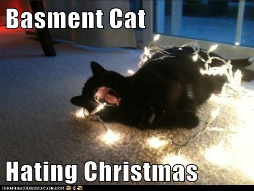 Basment Cat  Hating Christmas