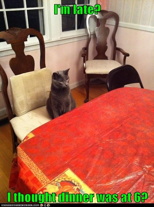 captions,dinner,late,Cats