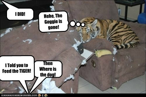Did you Feed the tiger?!?