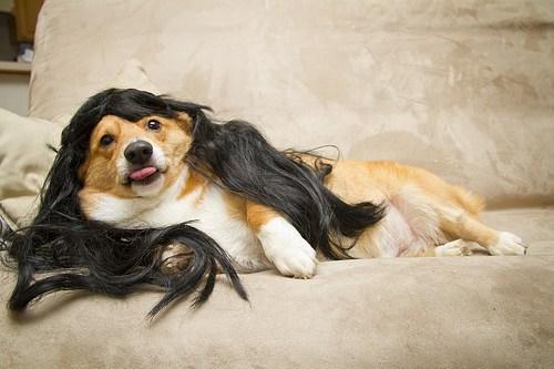 snooki,wig,dogs