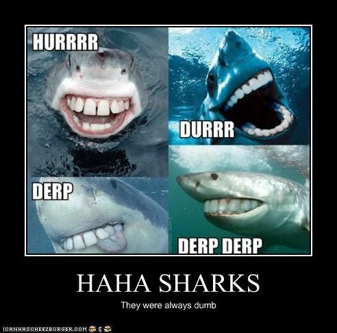 HAHA SHARKS