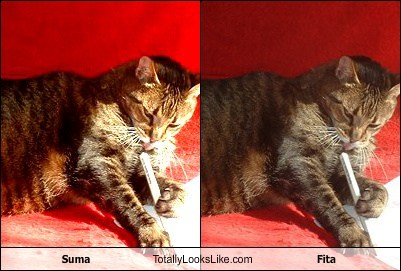 Suma Totally Looks Like Fita