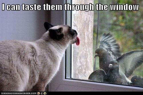 I can taste them through the window