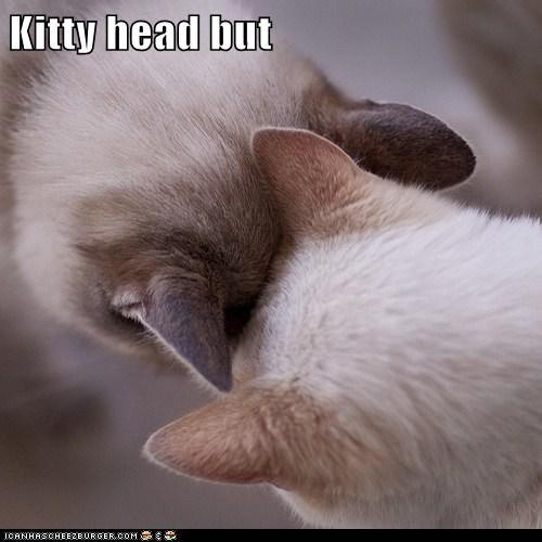 Kitty head but