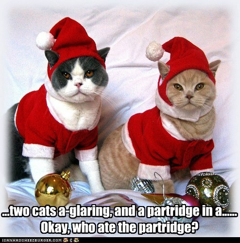 ...two cats a-glaring, and a partridge in a...... Okay, who ate the partridge?