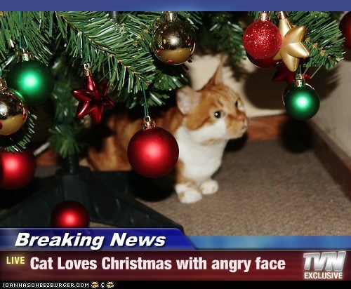 Breaking News - Cat Loves Christmas with angry face