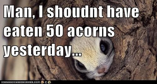 Man, I shoudnt have eaten 50 acorns yesterday...