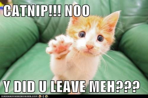 CATNIP!!! NOO  Y DID U LEAVE MEH???