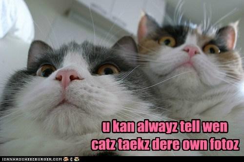 captions,camera,Photo,Cats