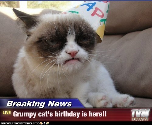 Breaking News - Grumpy cat's birthday is here!!