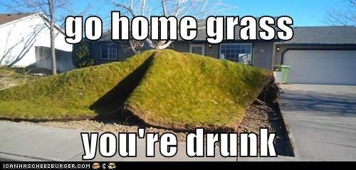 go home grass  you're drunk