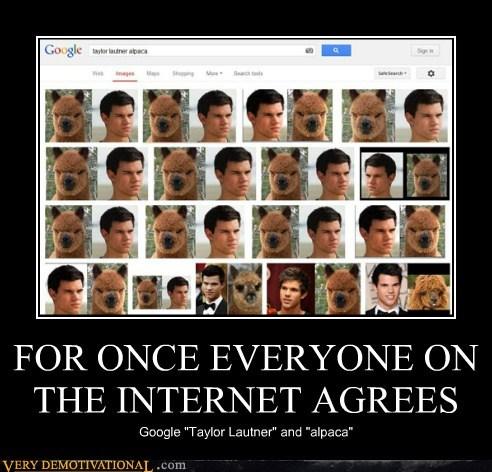 alpaca,internet,everyone,taylor lautner
