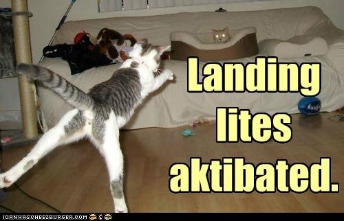 lights,landing,captions,Cats