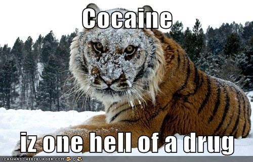 Cocaine  iz one hell of a drug