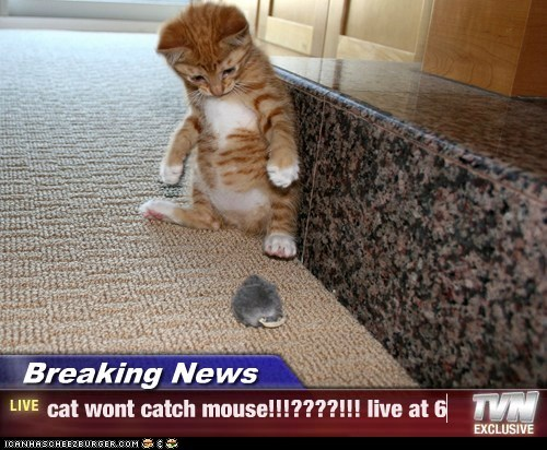 Breaking News - cat wont catch mouse!!!????!!! live at 6