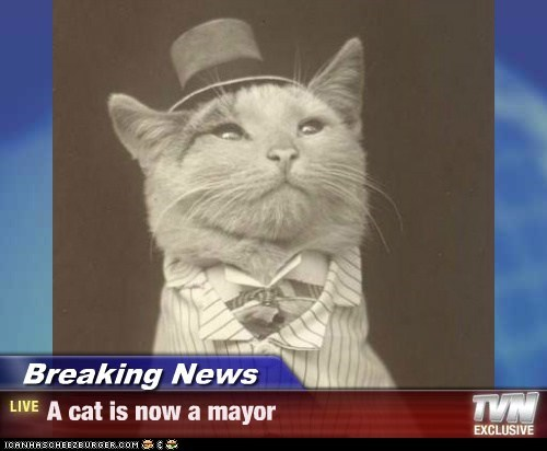 Breaking News - A cat is now a mayor