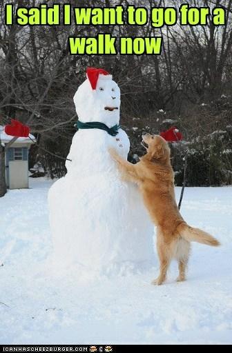dogs,snow,walks,winter,golden retriever,snowman