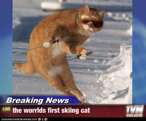 Breaking News - the worrlds first skiing cat