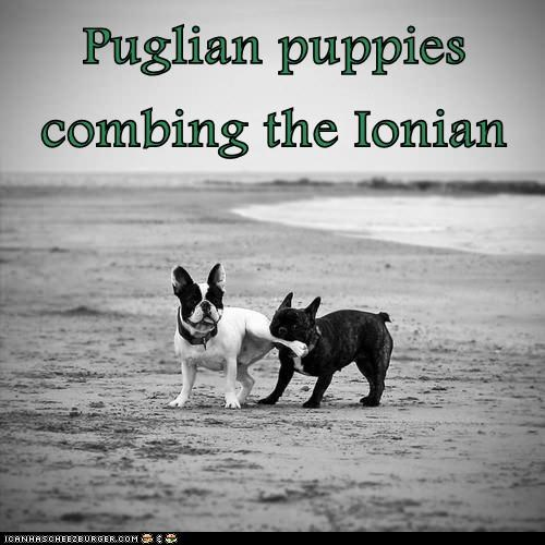 Puglian puppies combing the Ionian