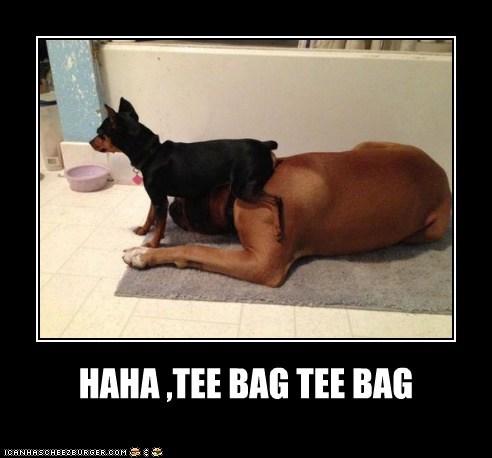 HAHA ,TEE BAG TEE BAG