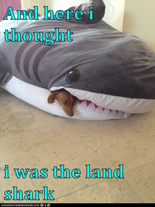 And here i thought  i was the land shark