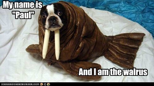 costume,the Beatles,dogs,john lennon,i am the walrus,paul mcartney,boston terrier,walrus