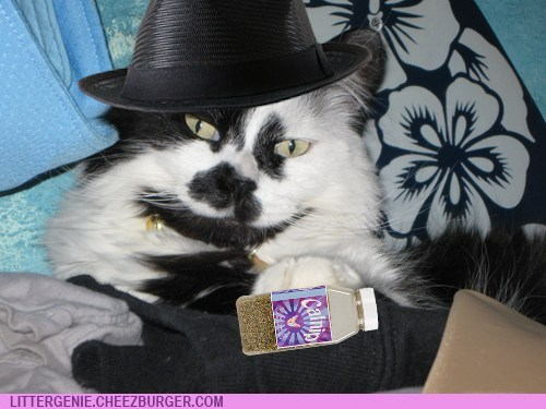 Gangster kitty knows where you are