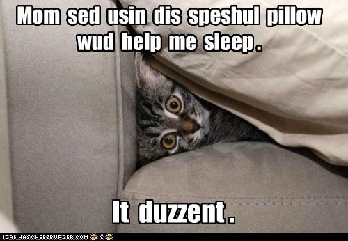 Pillow,captions,rest,sleep,Cats