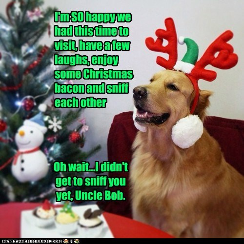Canine Christmas...It's Pretty Much What You'd Think.