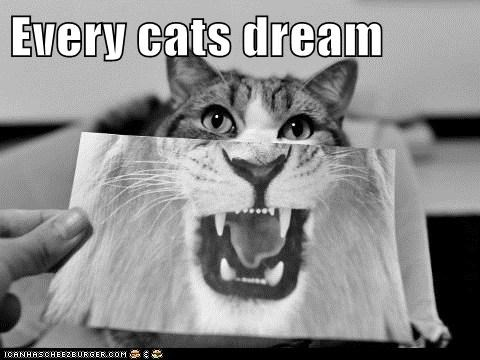 Every cats dream