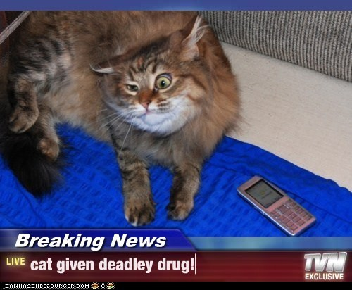 Breaking News - cat given deadley drug!