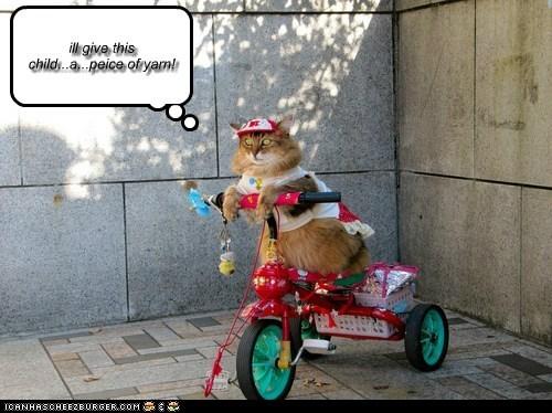 santa cat!!!