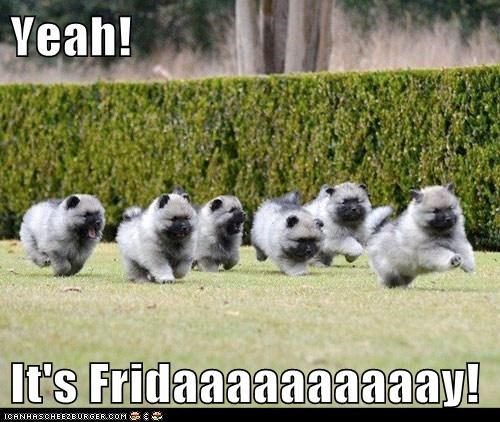 Yeah!  It's Fridaaaaaaaaaay!