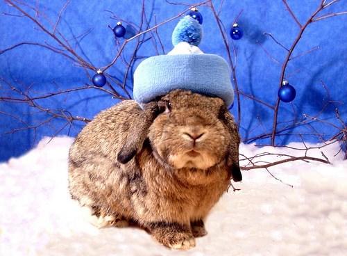 Bunday,snow,winter,rabbit,bunny,squee,hat