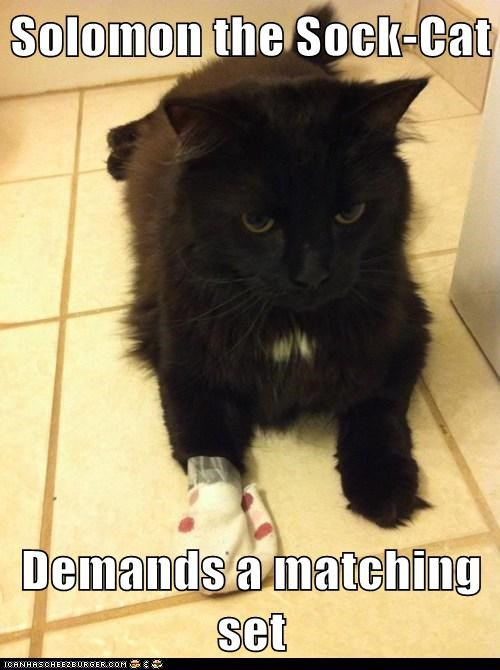 Solomon the Sock-Cat  Demands a matching set