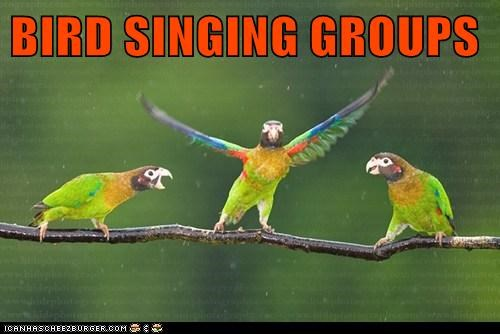 BIRD SINGING GROUPS