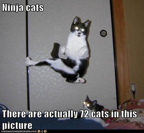 Ninja cats  There are actually 72 cats in this picture